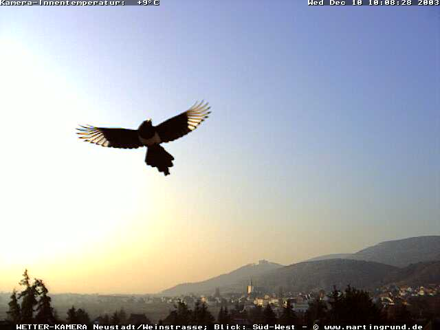 webcam : Wetter- und Panoramakamera Pfalz